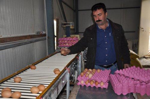 Tuncelili yumurtacıdan kapasite artırımı