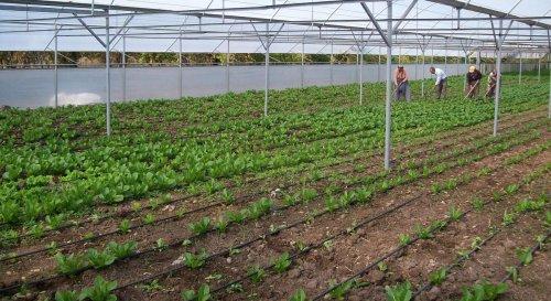 Isparta'da orman köylüsüne 231 bin liralık sera desteği