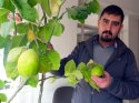 Hakkari'de saksıda limon yetiştirdi