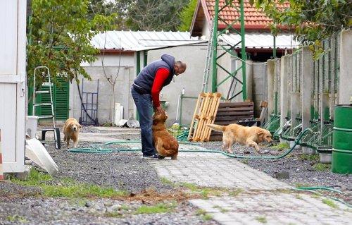 Köpek sahiplerini de eğitiyorlar