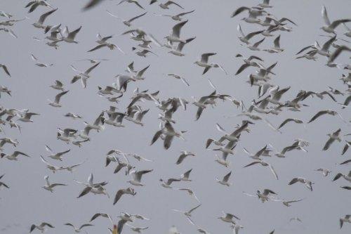 Rize'de yeni kuş türü keşfedildi
