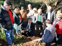 Urla'da RES için ağaçların kesildiği iddiası