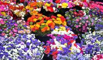 Çiçek ihracatı da sıfırlandı