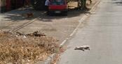 Google Street View aracı köpek ezdi