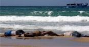 Korkunç görüntü, cesetler kıyıya vurdu!