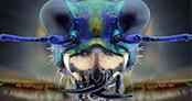 Makro fotoğraflarıyla oldukça ürkütücü işte o böcekler!
