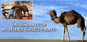 Kızgın deveninin sahibine yaptığı hareket tık rekoru kırıyor