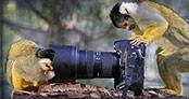 Fotoğraf meraklısı hayvanlar