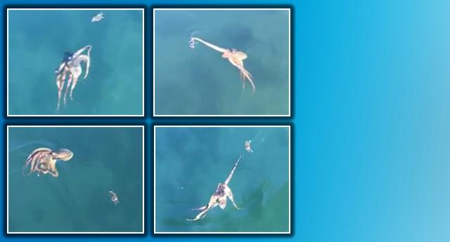 Denizin ortasında ilginç görüntüler