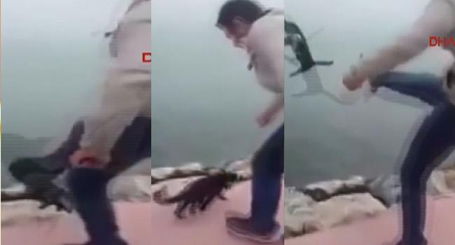 Kediye tekme atıp denize fırlattı