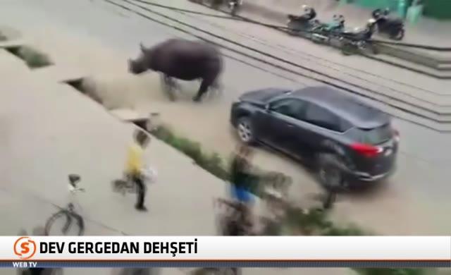 Gergedan milli parktan kaçtı: 1 ölü, 6 yaralı