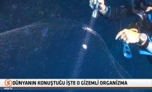 Türkiye'de görülen dev organizma, Dünya'da olay oldu! -video