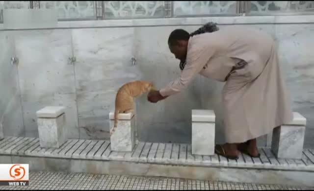 Susayan kediye elleriyle su içirdi