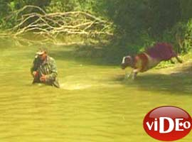 Sudan koyun geçirme yarışı - İzle